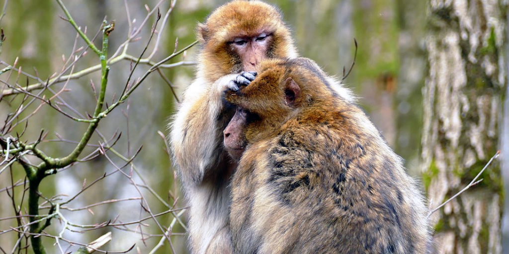 monkey brain relationships